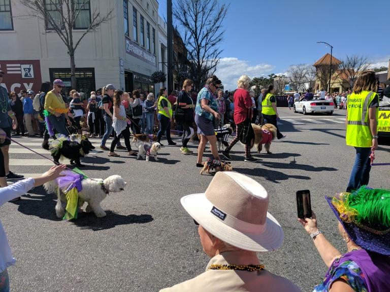Mardi Gras Dog Parade in Fairhope, Alabama