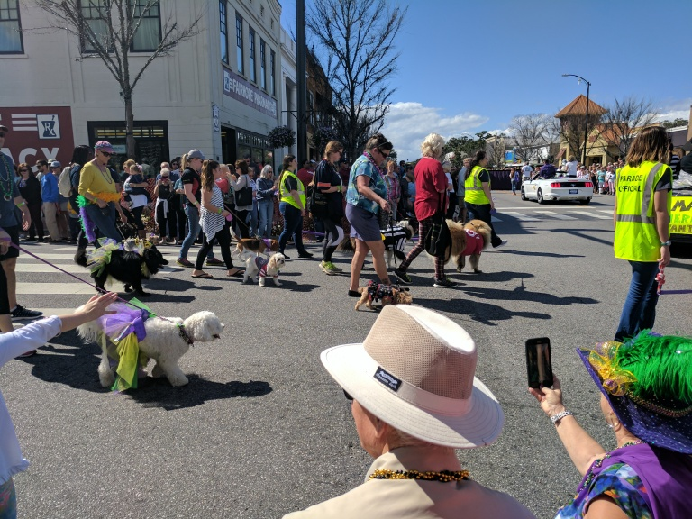 Mardi Gras Dog Parade in Fairhope, Alabama