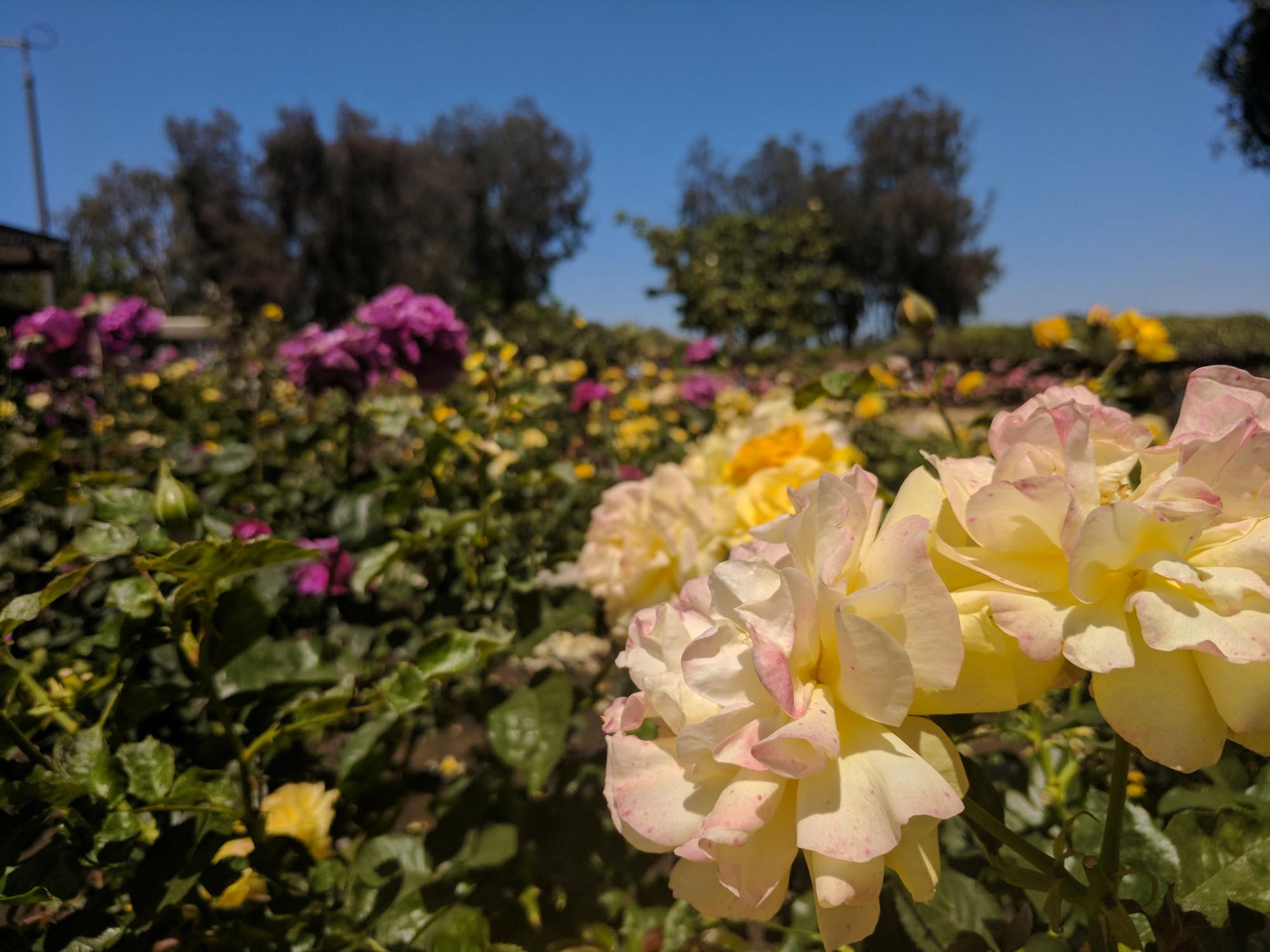 SoCal: Joshua Tree, San Diego, Seal Beach, L.A., Santa Monica ...